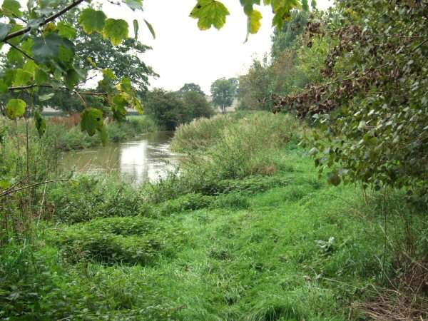 Pingle Meadow